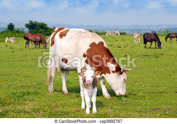 cows calf and horses on pasture - csp3992767