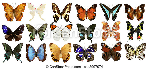 butterflies collection colorful isolated on white - csp3997074
