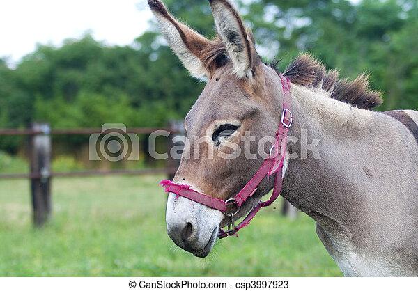closeup head of donkey
