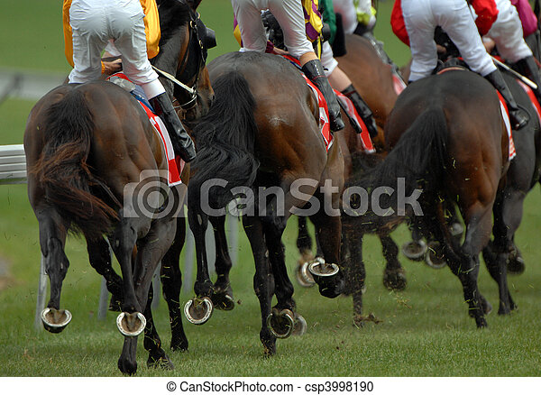 Rear view of a pack of race horses - csp3998190