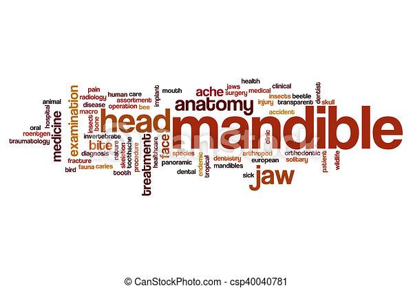 Mandible word cloud - csp40040781
