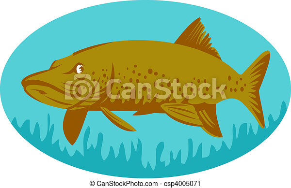 Pike or muskie fish swimming set inside an oval - csp4005071
