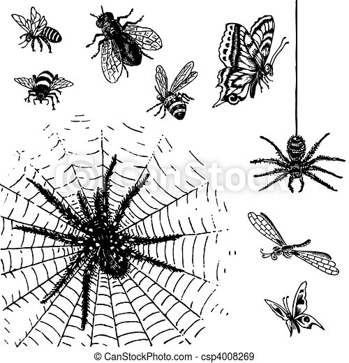 antique insects set (vector) - csp4008269
