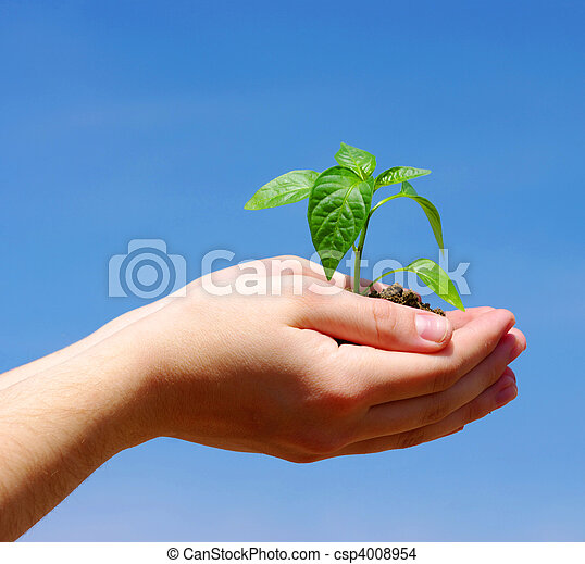 Growing green plant - csp4008954