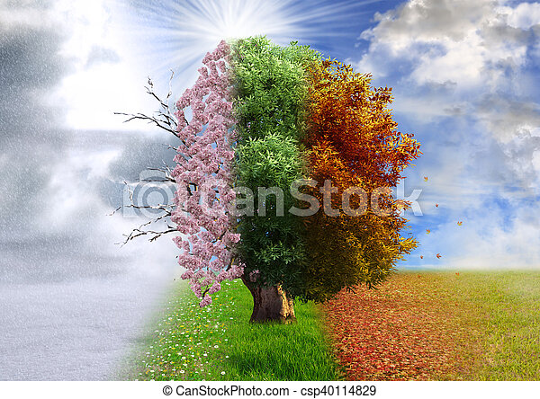 Four season tree, four seasons in one picture