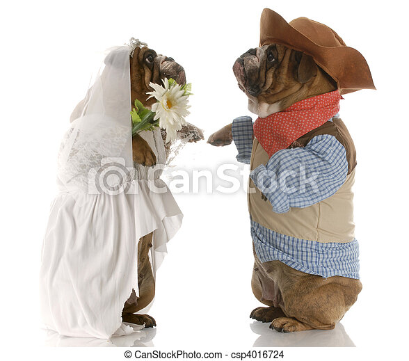 dog bride and groom - csp4016724
