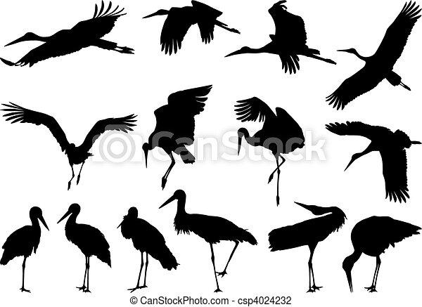 Stork silhouettes - vector  - csp4024232