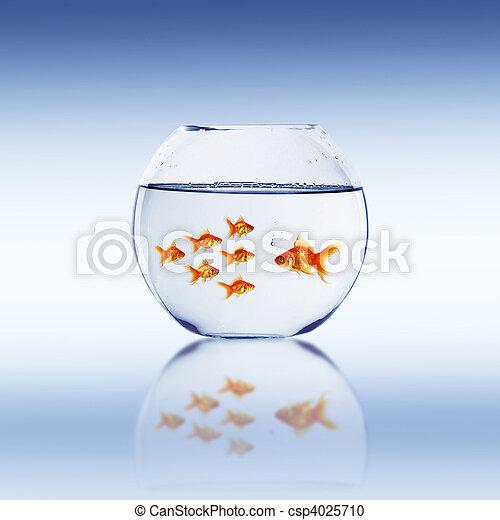 Photographies de poisson rouge nager dans une aquarium for Tarif poisson rouge