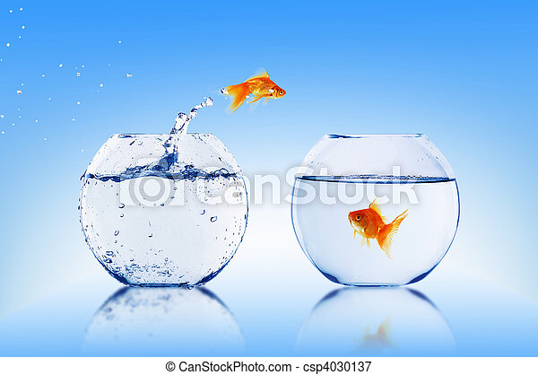 Image de poisson rouge saut aquarium eau csp4030137 for Tarif poisson rouge