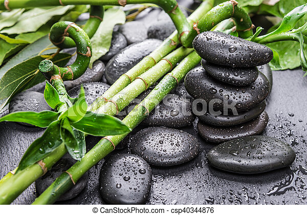 Spa concept with black basalt massage stones and lush green foliage covered with water drops on a black background