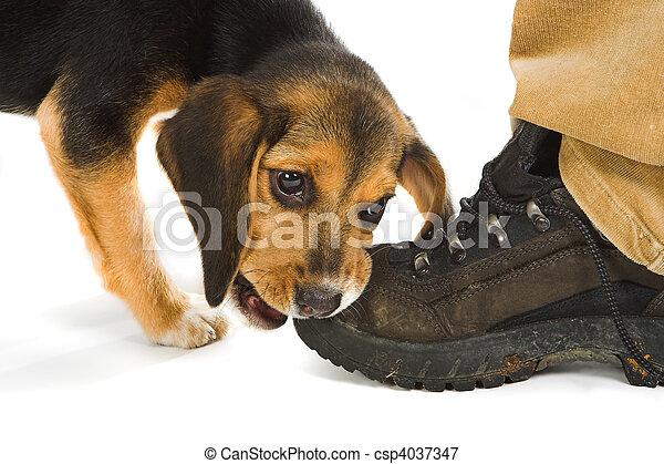 Boot lover - csp4037347