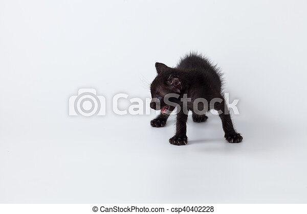 cute kitty balck cat playing white background relax cozy rest close up