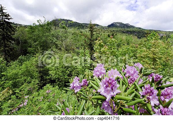 Grandfather Mountains - csp4041716