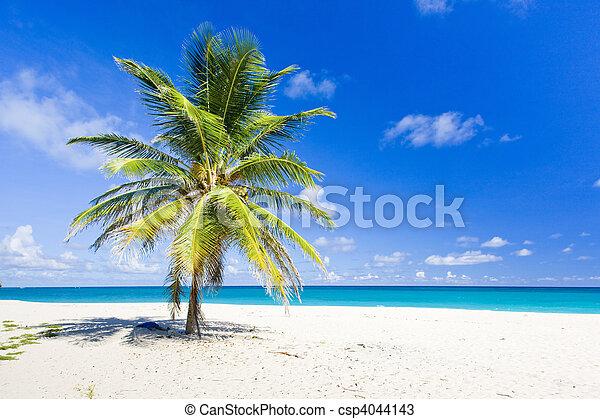 Foul Bay, Barbados, Caribbean - csp4044143