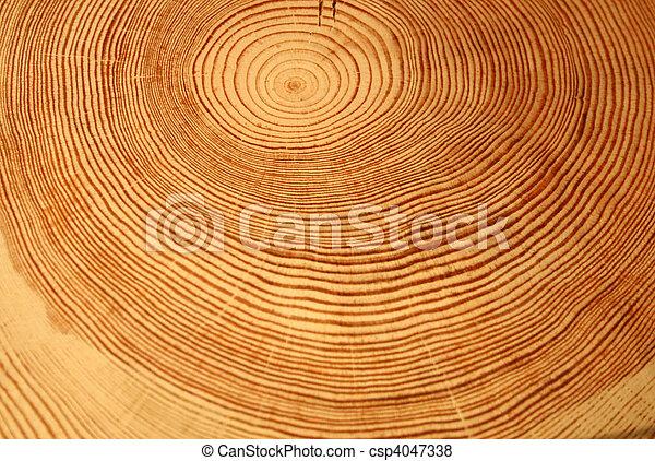 anneaux arbre, année - csp4047338