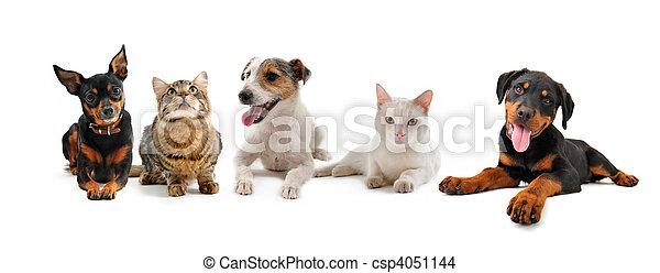 hundebabys, Katzen, Gruppe - csp4051144