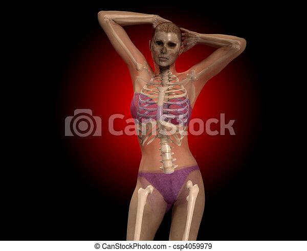 X 光線, 女性ストックイラストレーション