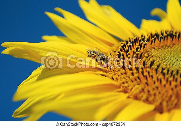 bee sucking nectar - csp4072354