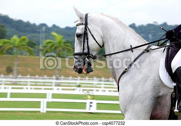 Dressage Horse - csp4077232