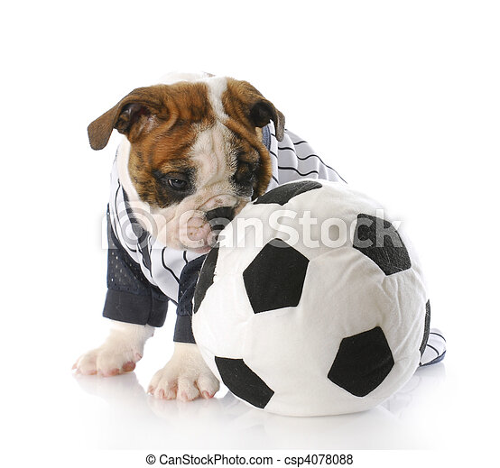 puppy with soccer ball - csp4078088