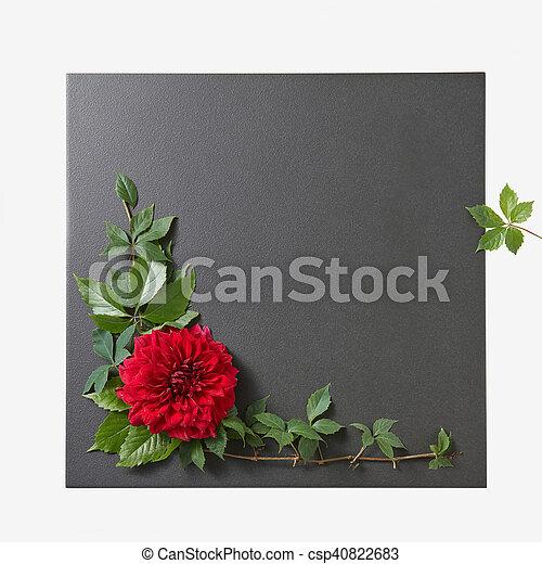 flower on a black background with leaves, floral frame, Spring or summer background