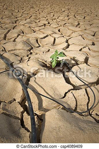 drip irrigation system in the desert - csp4089409