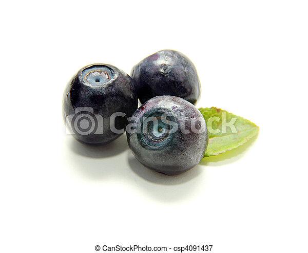 blueberries  - csp4091437