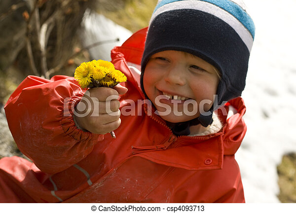 Smiling child proudly showing a bouquet of coltsfoot, one of the earliest spring flowers - csp4093713