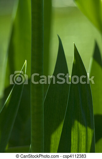 Iris Stalk and Leaves - csp4112383