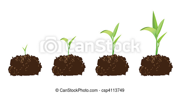 seedling or germination - csp4113749