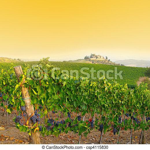 Vineyard in Tuscany, Italy at dusk - csp4115830