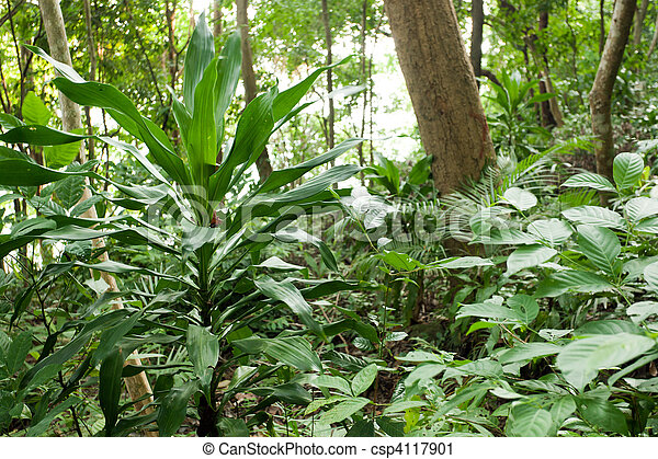 rainforest plants - csp4117901