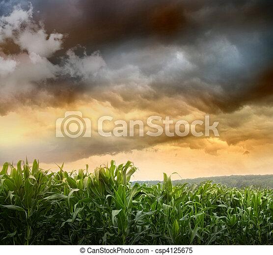 Dark skies looming over corn fields  - csp4125675