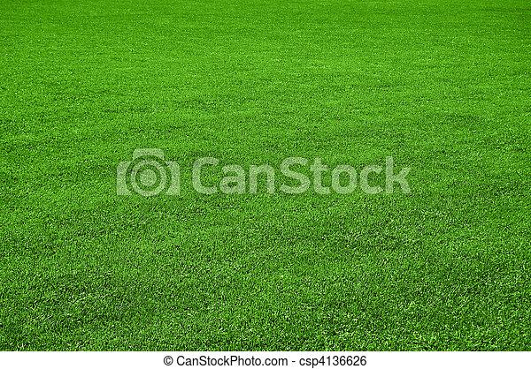 Image de pelouse texture csp4136626 recherchez des for Pelouse tarif