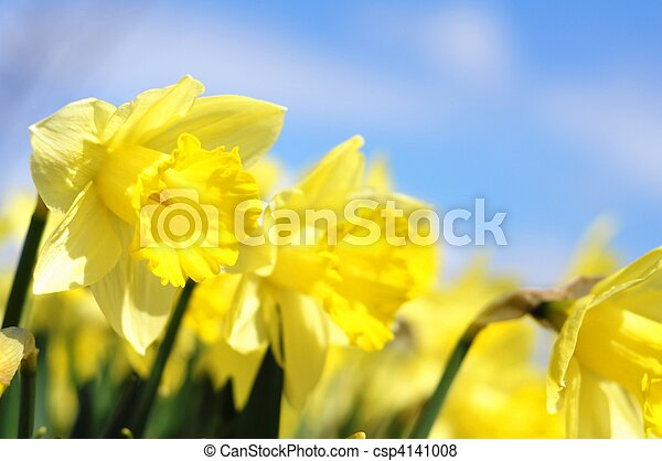 flower - csp4141008