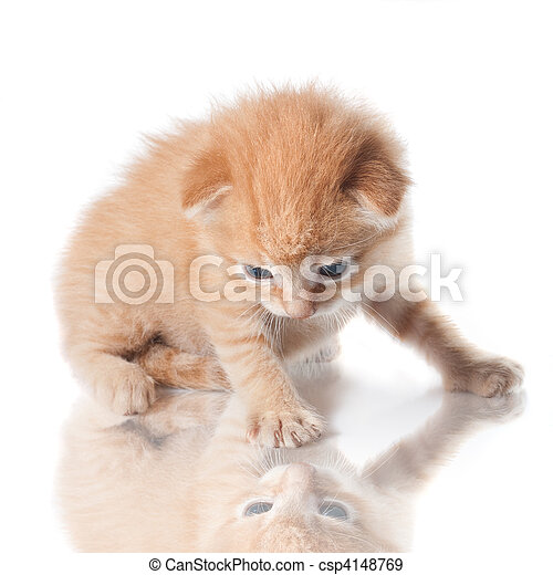 kitten looking on his reflection isolated on white - csp4148769