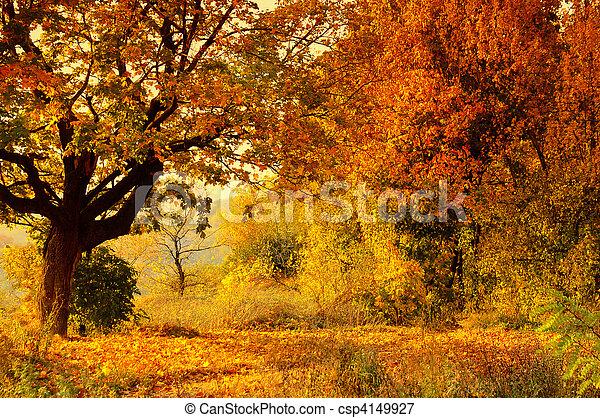 otoño, bosque - csp4149927