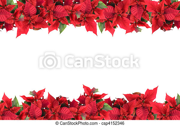 christmas frame from poinsettias isolated on white - csp4152346