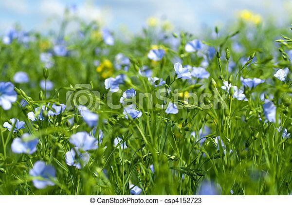 flax flowers - csp4152723