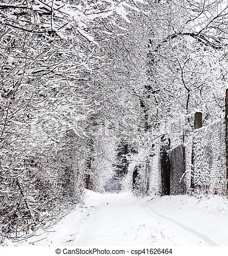 Winter landscape. frozen plant. Beautiful nature. weather season. Cold