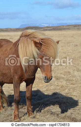 Chestnut horse with a wind blown blonde mane.