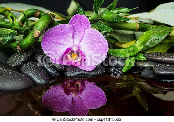 Spa concept with black basalt massage stones, pink orchid flower and lush green foliage covered with water drops reflected in water