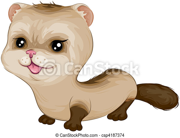 Baby Ferret - csp4187374