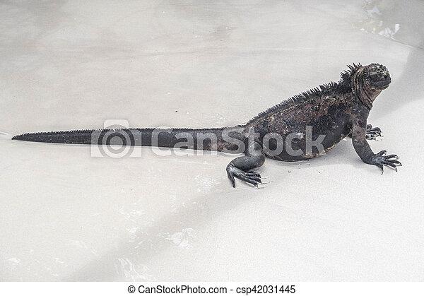 sea lizard on a rock at the beach - csp42031445
