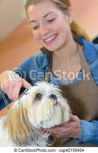 groomer taking care of a dog