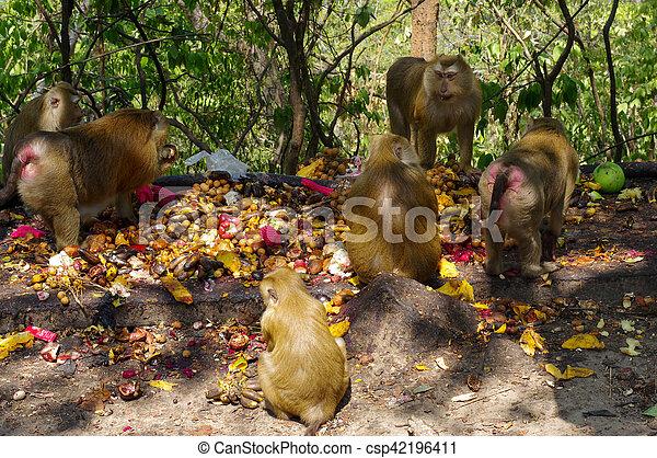 phuket, comida, mono, familia , macaca, thailand., terreno, fruits - csp42196411
