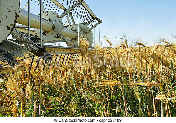 Old combine harvester stopped in barley field - csp4223189