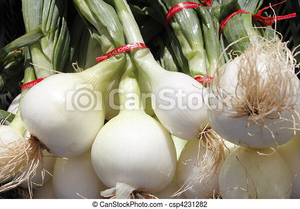 Bulb, white onions with tops. - csp4231282