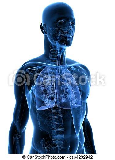 human lung - csp4232942