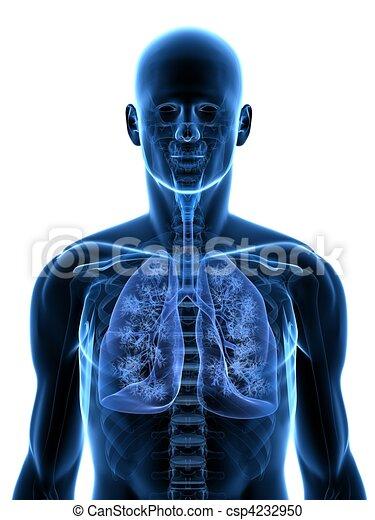 human lung - csp4232950